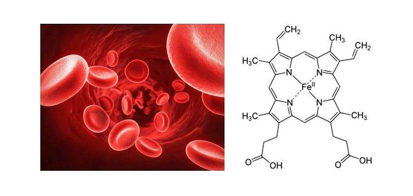 Hemoglobin and eme group